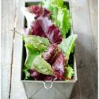 Salatid meie aiast
