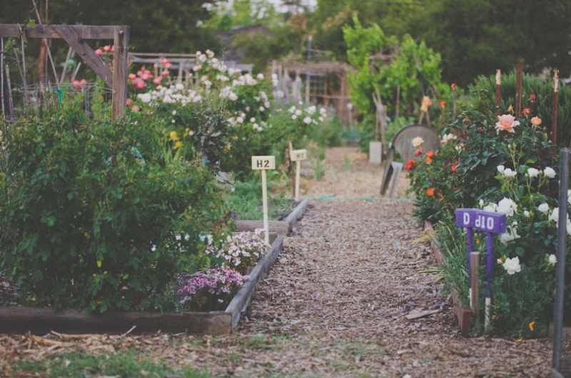 Main Community Garden in Palo Alto