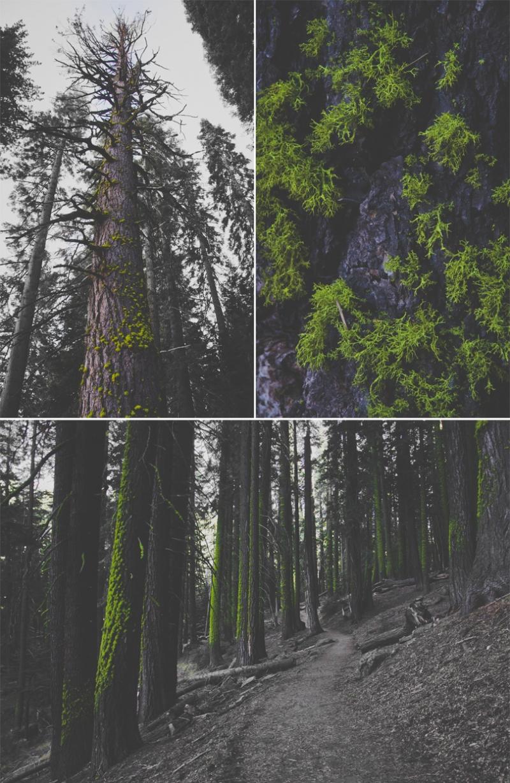 Hiking in Yosemite, Glacier Point