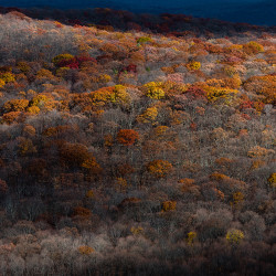 autumn in new york, fall foliage, fall colors, trees, hills, valleys